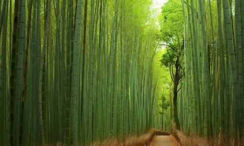 悠久の自然と調和できる地、鎌倉で人を癒す